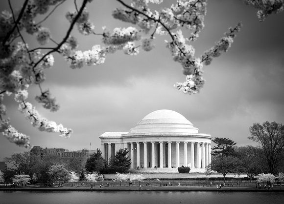 Washington D.C.: Cherry Blossoms at Jefferson Memorial